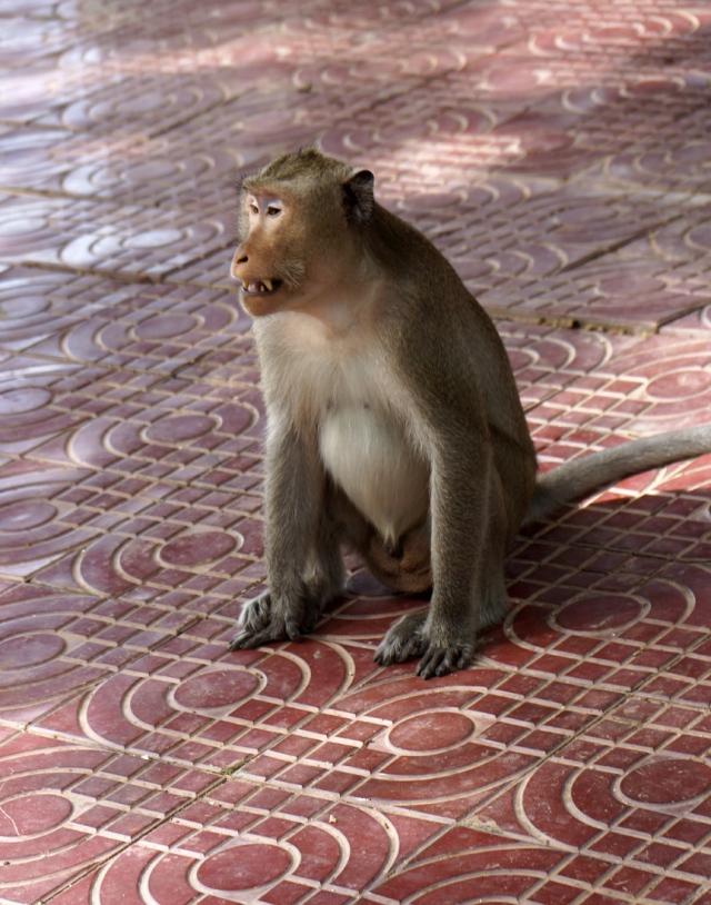 One mean monkey