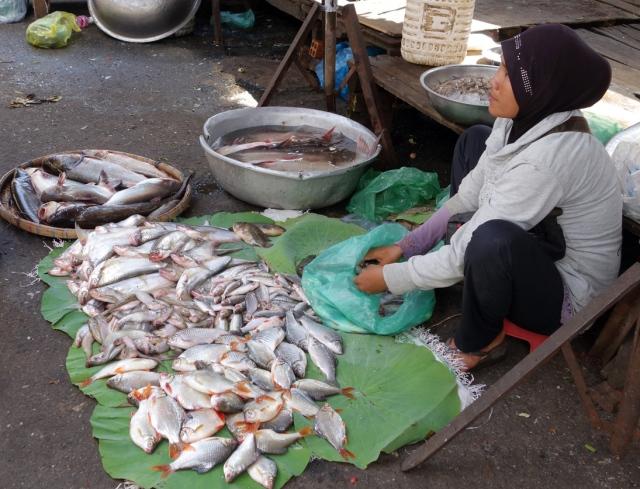Fresh fish everywhere
