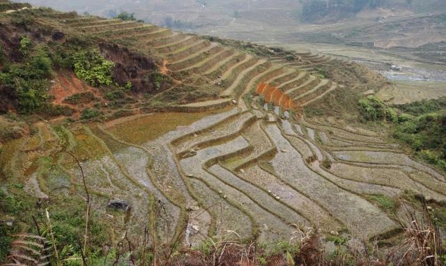 Rice paddies everywhere