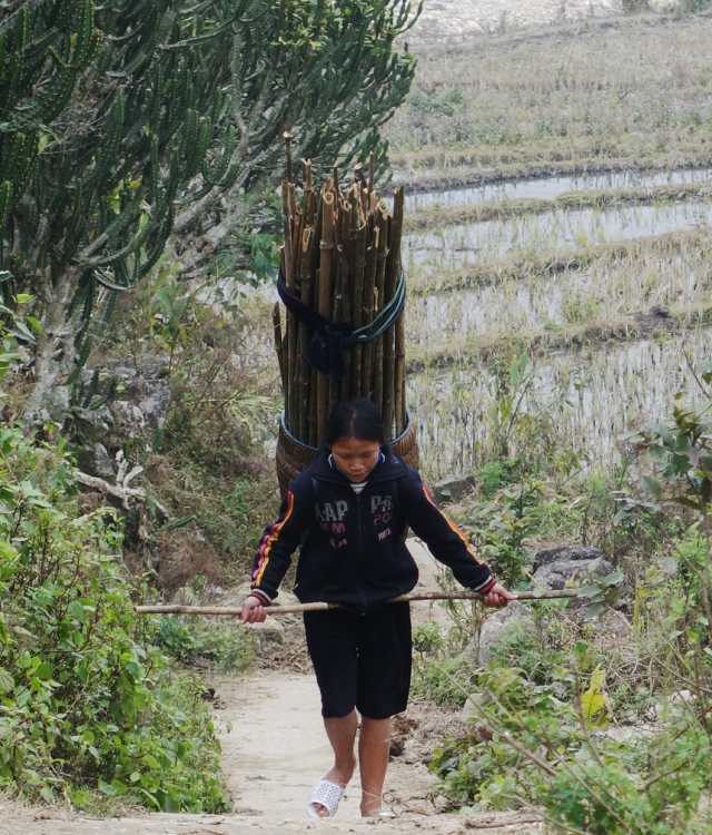 These young ladies where gather bamboo