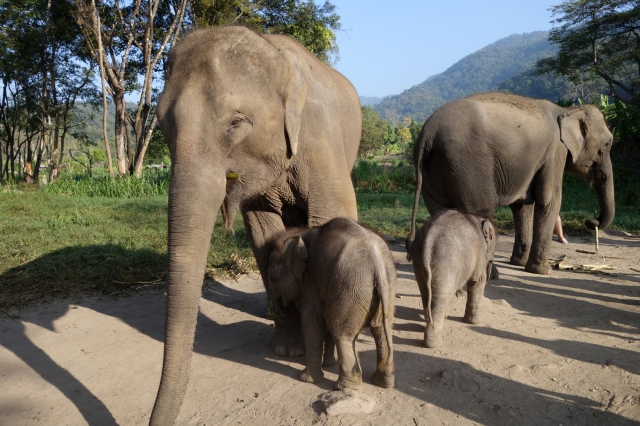 The two new baby elephants -- 3 and 4 weeks old