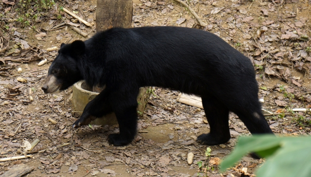 Very healthy bears